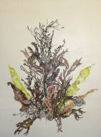Sea Flowers II